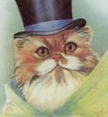 Cat Hatter II